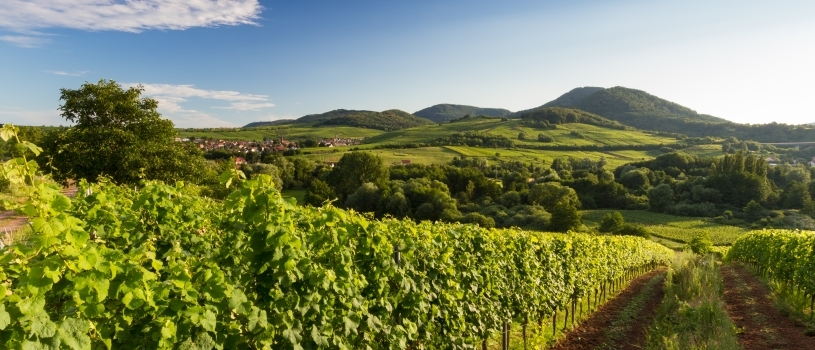 Wander-Coaching in der Pfalz